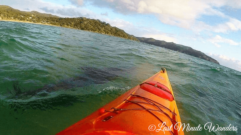 Dolphin underwater by kayak, Great Barrier Island