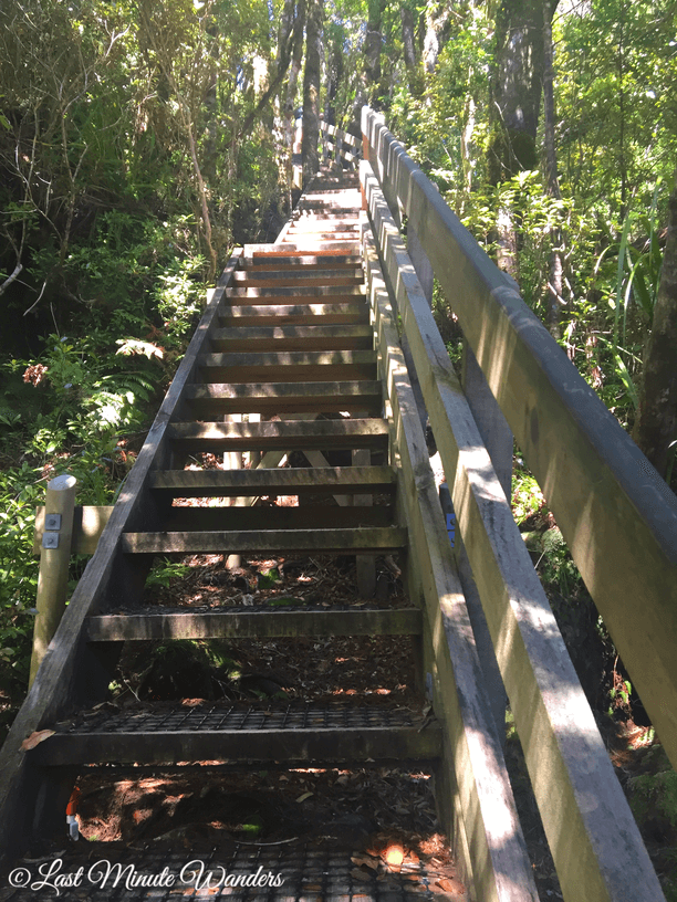 Wooden stairs leading up through trees.