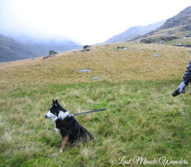 Border collie dog sat on grassy mountain on lead