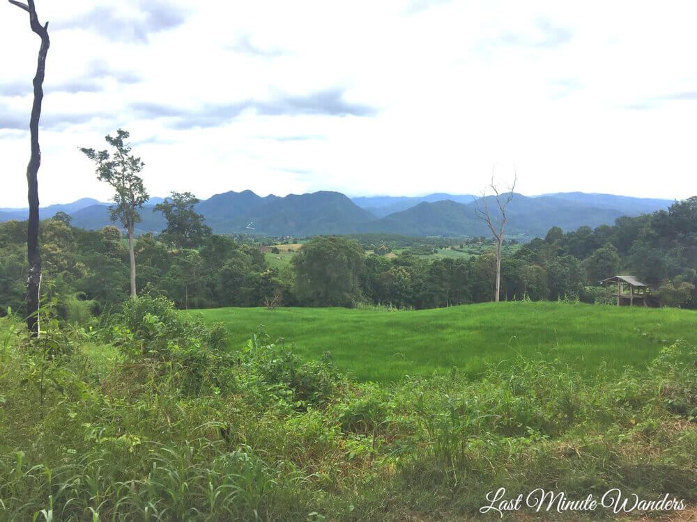 View across rice paddies with mountains and trees behind