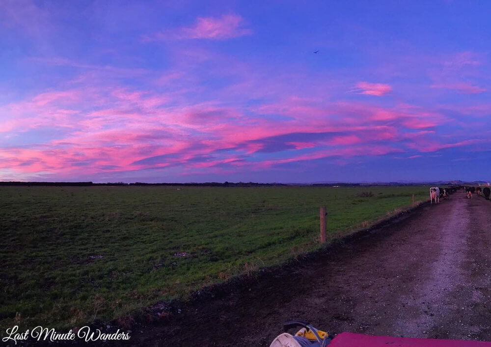 Sunrise on a dairy farm