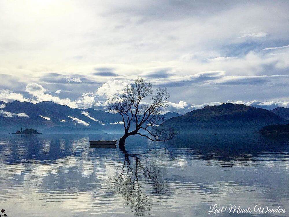 Tree silhouette in mountain lake
