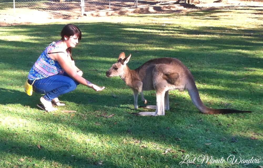 Woman feeding a wallaby