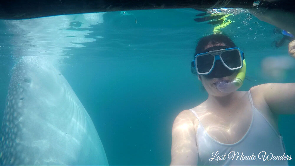 Woman snorkelling next to whale shark