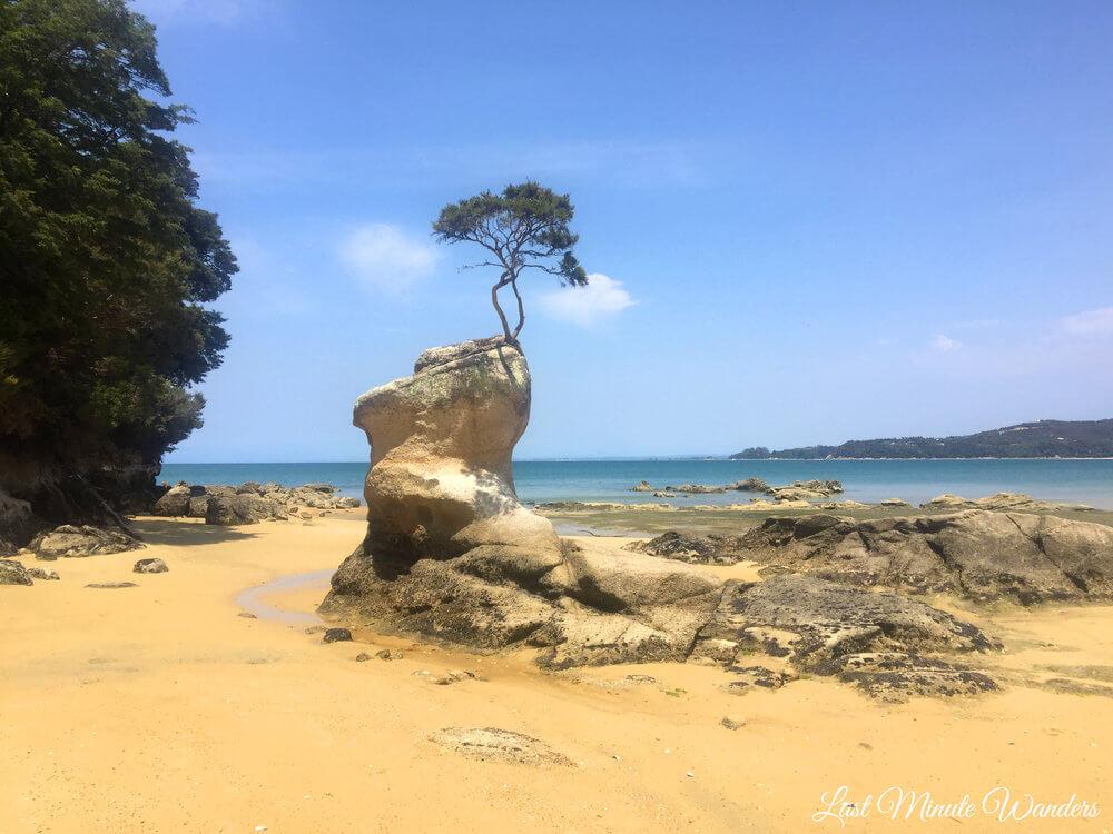 Tree growing on rock pillar on beach