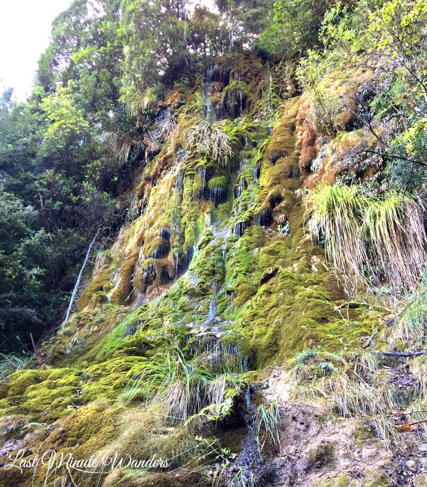 Delicate, mossy waterfall