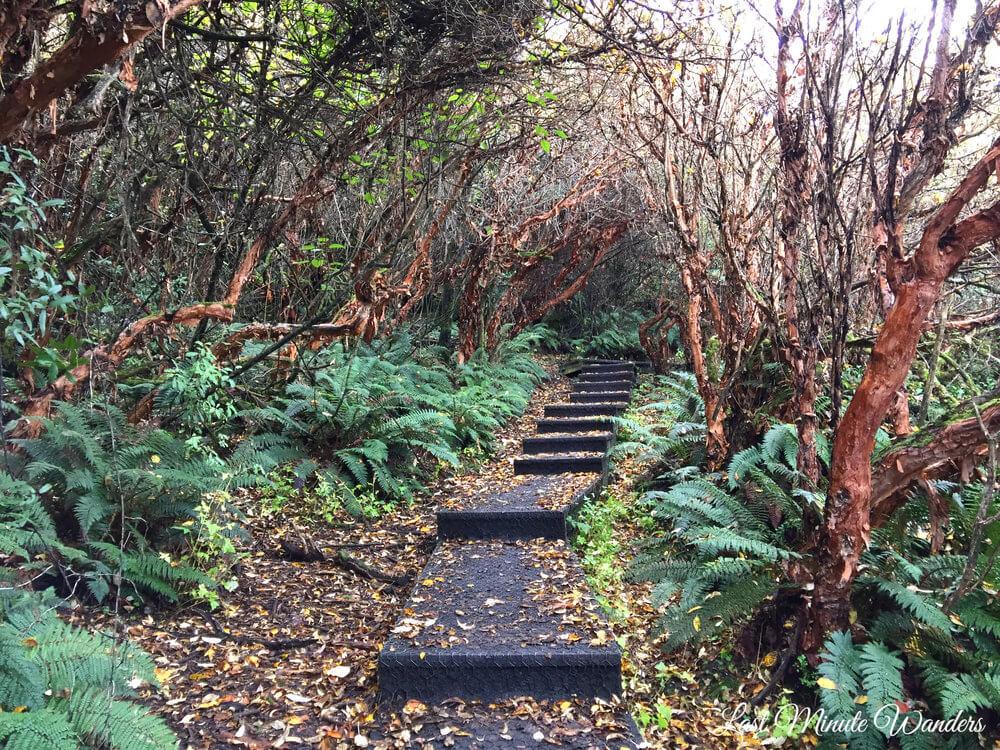 Steps leading through trees