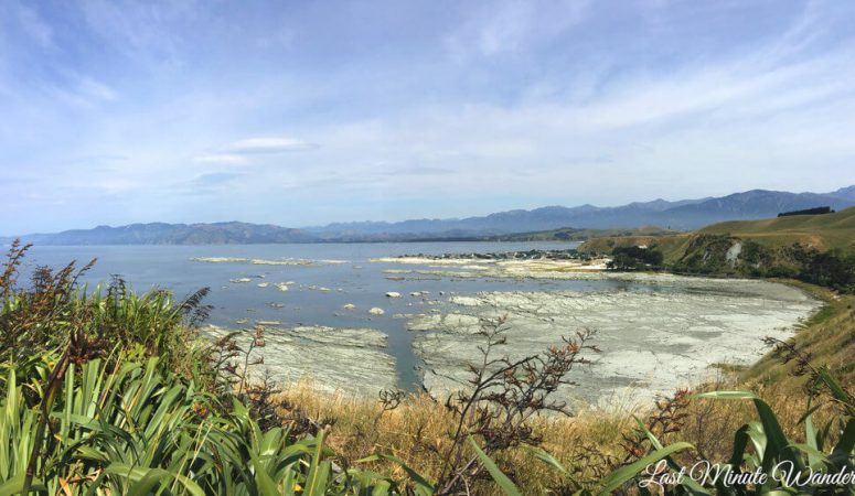 A guide to the Kaikoura Peninsula Walkway