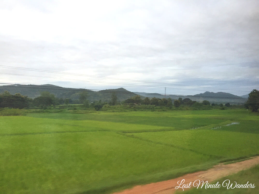 View of rice paddies from train