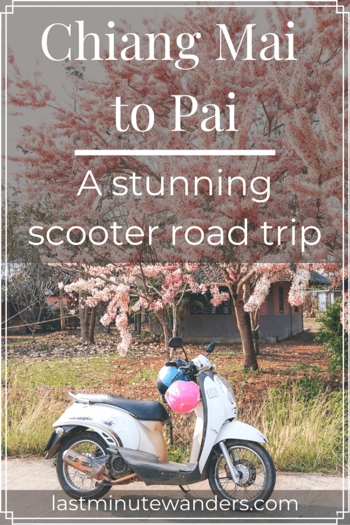 Scooter with pink helmet under cherry blossom tree with text overlay - Chiang Mai to Pai: a stunning scooter road trip