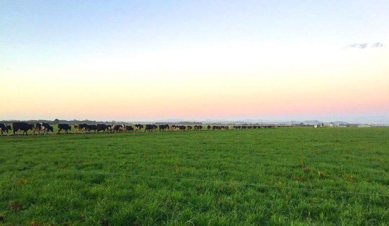 How to find outdoor seasonal work in New Zealand