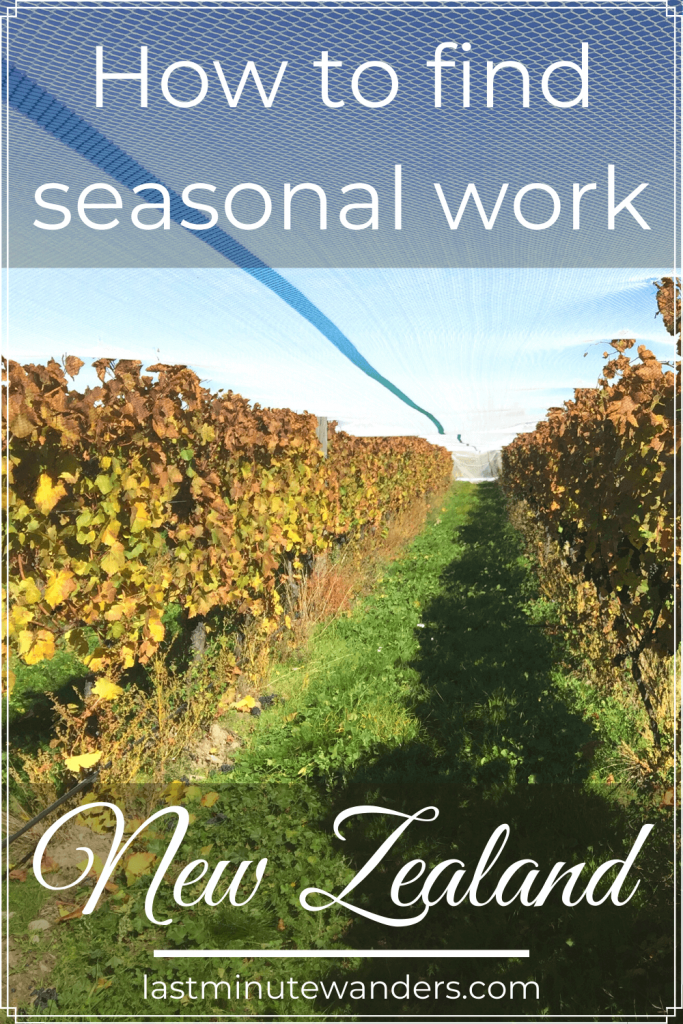 Vineyard row with text overlay - How to find seasonal work in New Zealand