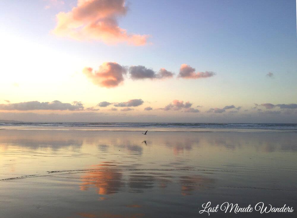 Reflective beach with bird flying