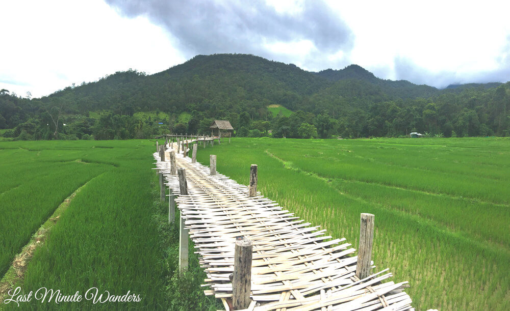 Bridge made of bamboo over rice fields