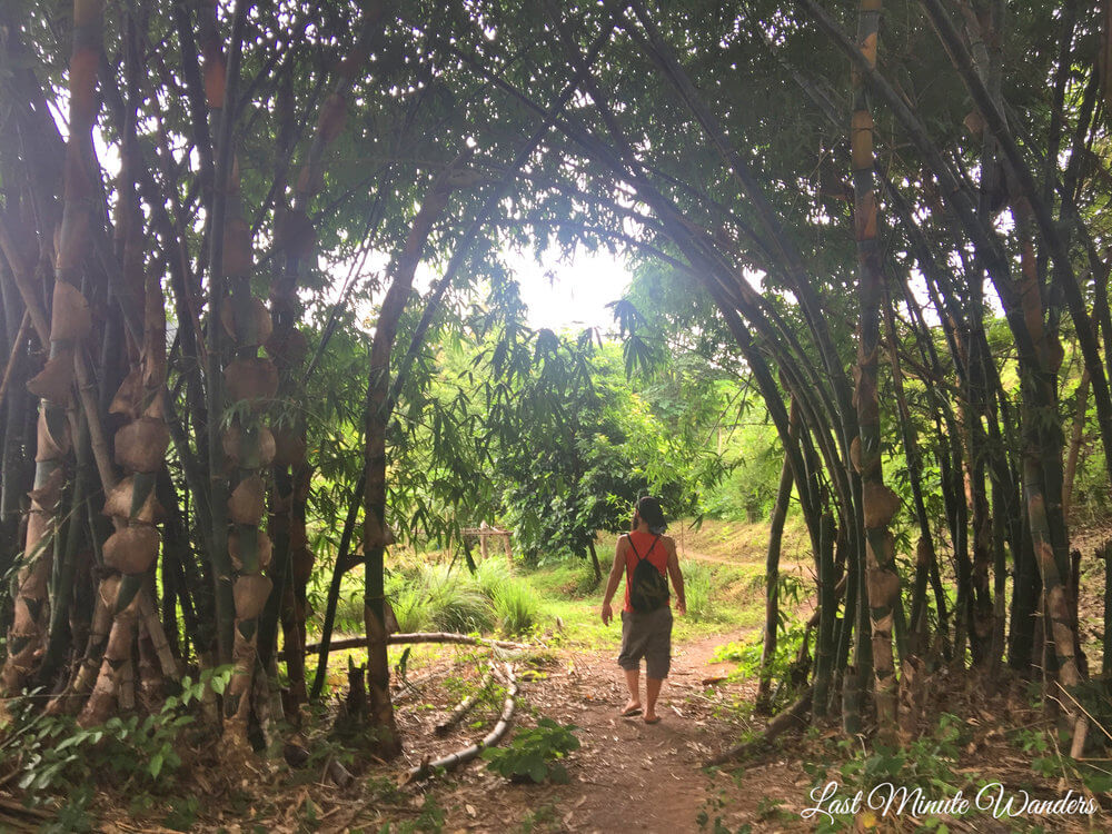 Man walking under bamboo arch