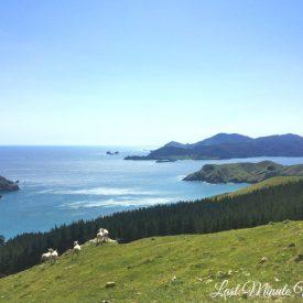 Sheep, mountains and sea