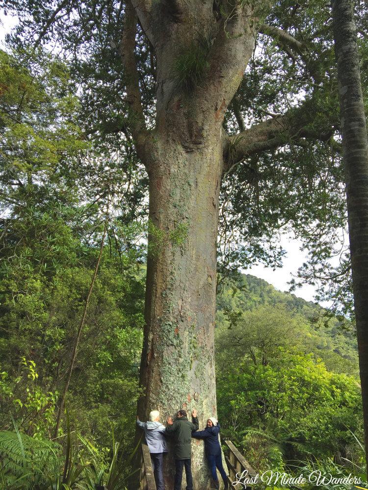 Three people hugging a huge tree