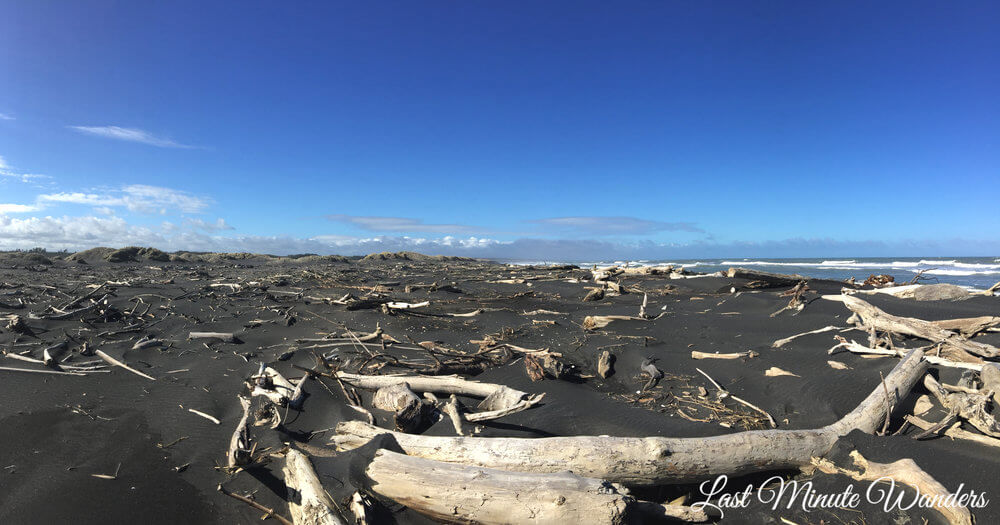 Wide expanse of black sand beach littered with smooth white driftwood