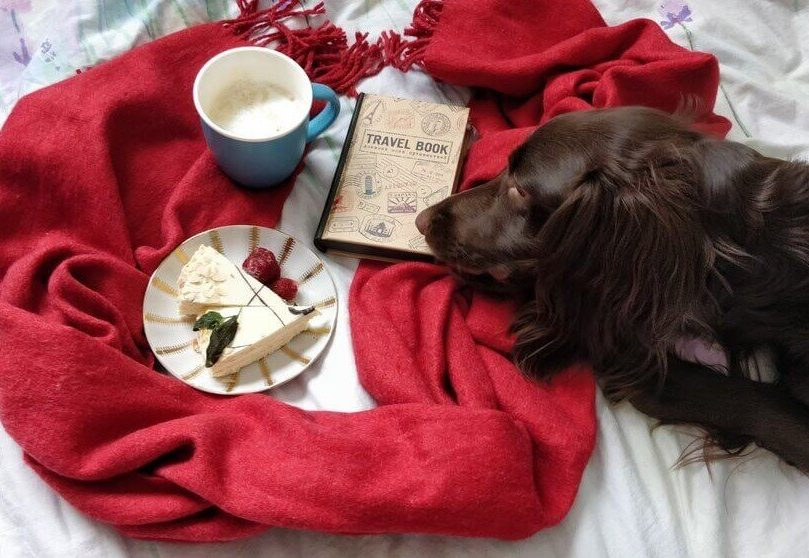 Brown dog lying on bed with red scarf, travel book, coffee and cake